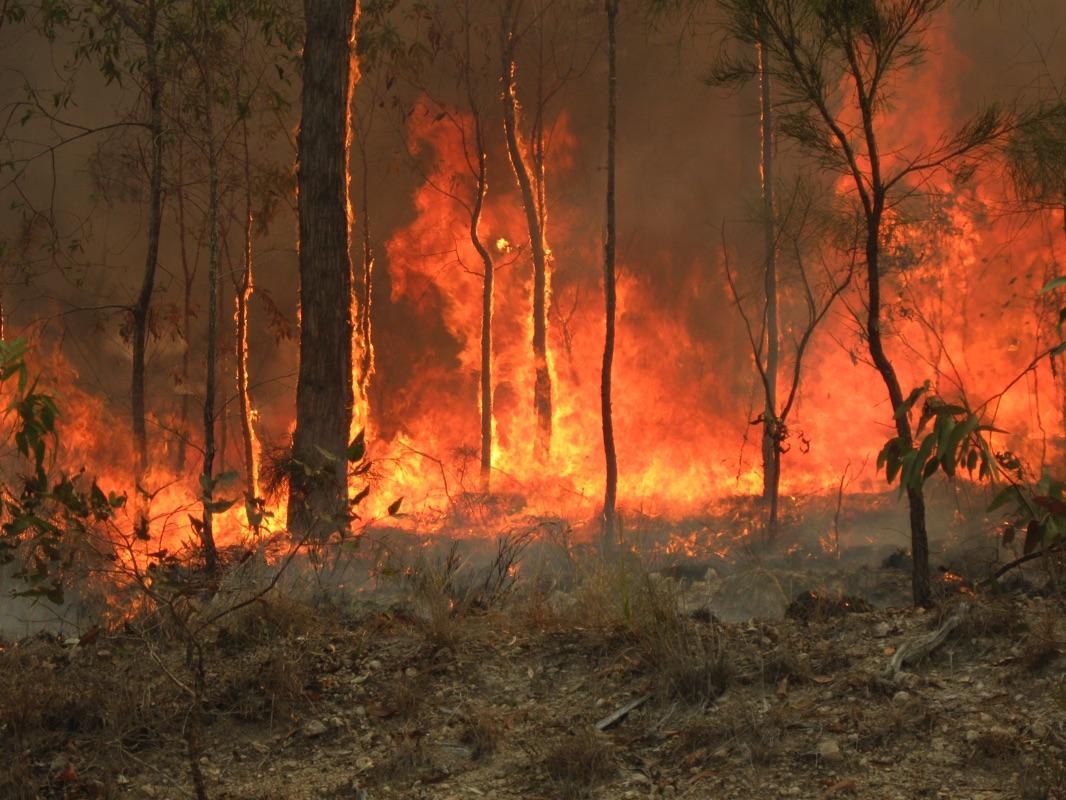 Incendies, méga-feux : comprendre l'urgence du climat avec Esprit Planète